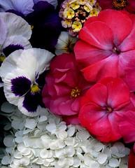 58618.06 bouquet (horticultural art) Tags: horticulturalart flowers bouquet