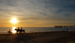 Beach with horses in the sunset in Versilia (Darea62) Tags: sunset horses beach nature landscape seascape skyscape skyporn tramonto versilia marinadipietrasanta animal jockey bridge travel family pietrasanta