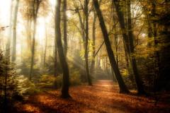 Forêt de Carnoët (Faouic) Tags: france bretagne finistère quimperlé forêtdecarnoët brume automne