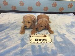 11-26 Roxie Boys_Pic 2
