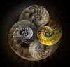 Nautilus 3 (marianna_a.) Tags: p3160685 nautilus shell crosssection fractal circle spiral repetition composite psd nik mariannaarmata hss abstract abstrackja photoshop