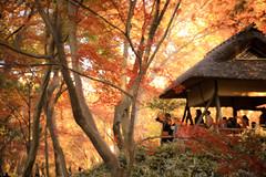 六義園 07 (sunuq) Tags: tokyo japan 日本 東京 canon eos 5dsr ペッツバール ロモグラフィ lomography zenit petzval 六義園 紅葉 rikugien