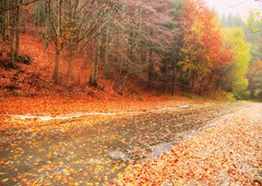 * Goodbye Autumn :  in the rain * (argia world 1) Tags: montagna mountains appenninimodenesi modena alberi trees autunno autumn pioggia rain strada road foglie leaves foresta forest