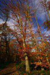 Herbstmotive (Lutz Blohm) Tags: herbststimmung herbst herbstimpressionen herbstidylle herbstsonne zeissbatis18mmf28 pfälzerwald sonyalpha7aii