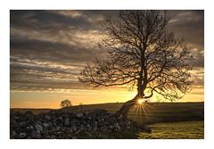 Foolow Tree (KRLandscapes) Tags: lee06mediumndgrad red tree sunrise star golden hour peakdistrict buxton sun