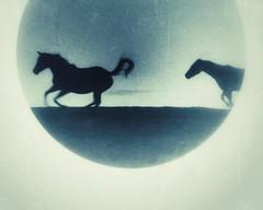 (Jen MacNeill) Tags: snapseed film microscope experimental alternative 35mm horse horses equine art littledoglaughednoiret