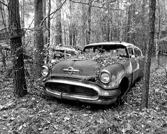 Oldsmobile at Old Car City (sherri_lynn) Tags: blackandwhite bw oldcars oldcarcity junkyard rusty rusted oldsmobile georgia whitega old ruralgeorgia