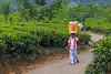 Ice Cream Vendor, Rothschild Tea Estate, Sri Lanka (bfryxell) Tags: horn icecreamcone icecreamseller pussellawa rothschildteaestate srilanka teaplant teaplantation vendor