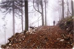 Forests of Srnjak, above Logatec (rlubej) Tags: notranjska forest fog people