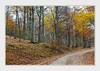 - DSC_0747 (Ferruccio Jochler) Tags: autunno foliage bosco alberi strada foresta