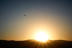 Sun Eagle (RobMacPhotography) Tags: canberra act australia eagle sunset urambi hills mountains sun rays flight bird flying sony a6000 rob mac silhouette