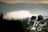 48/52 Morning's Breath (JJFET) Tags: 48 52 weeks for dogs elk border collie sheepdog dog