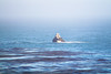 (nnyanmaruu) Tags: rock sea pch america los angeles san fransisco rocky ocean