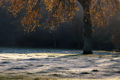 Le chêne (martine_ferron) Tags: arbre chêne automne hiver geléeblanche