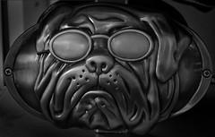 Bulldog (arbyreed) Tags: arbyreed monochrome metal casting bulldog bulldogwithsunglasses metallic metallictonesandtextures close closeup sculpture pugs