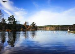 Peaceful place (Tonca Photography) Tags: birds lake sky blue autumn oslo