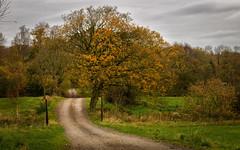 Autumn colors [44/100]
