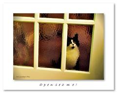 Open sez me! (Oul Gundog) Tags: cat door kitchen open sez me glass window stare command control freak newtownards co down northern ireland ulster uk