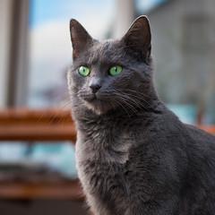 Portrait (Jana`s pics) Tags: cat katze grau grey fell green grün outdoor drausen haustier hauskatze animal tier pet