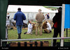 The English IMG_5732 North Devon Show (Trevor Durritt) Tags: candid ©trevordurritt canoneos600d people theenglish canonefs24mmf28stm northdevonshow devon england pancake farming animals agriculture dslr