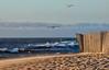 Seagulls spotting prey on the beach (rolfstumpf) Tags: portugal miramar praia beach birds sea seagull sand wind ocean atlantic surf waves fence