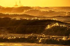 seagulls shrimps and sea (Wöwwesch) Tags: waves golden sunset fishing shrimps seagulls water spray storm autumn