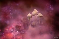 Sprookjes bos! (nsiepelbakker) Tags: editting mushrooms bokeh color