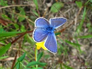 Butterfly 1491