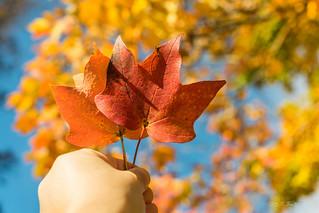 秋天的愿望 ♫