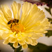 Mum/Bee Black Vignette