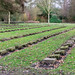 International war graves – Ohlsdorf Cemetry Hamburg