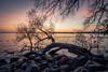 Sunrise Over Madison (pauliefred) Tags: sunrise lake mendota lakemendota capitol wi goldenhour tree uwmadison uw madison wisconsin unitedstates clouds