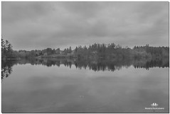 NOVEMBER 2017  NGM_6338_2997-1-222 (Nick and Karen Munroe) Tags: peaceful tranquility reflection reflections reflective reflectingtrees trees reeds tree water waterfront walk fall beauty beautiful brampton brilliant blackandwhite bw blackwhite bandw munroedesignsphotography munroedesigns munroephotography munroe nikon nickmunroe nickandkarenmunroe nature nikon2470f28 nickandkaren nick d750 nikond750 2470 2470f28 karenick23 karenick karenandnickmunroe karenmunroe karenandnick karen ontario outdoors ontariocanada canada heartlakeconservationarea heartlake heartlakeconservation conservationareas conservation lake lakefront river