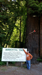 Immortal.Tree.BillP (redwoodcoaster) Tags: humboldt redwoods redwood coast national park travel california eurekaca