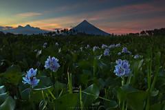 IMG_4097 (mykel7873) Tags: legazpi bicol albay camalig quitinday sumlang lake landscape nature sunrise sunset long exposure philippines mayon volcano flowers