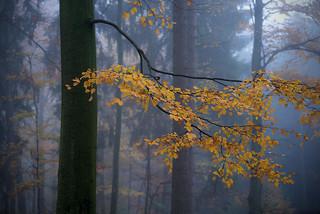 Nebelwald (4)