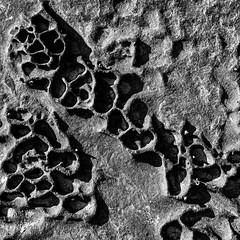 Sandstone cups (OzzRod) Tags: pentax k1 hdpentaxdfa1530mmf28 rock weathering honeycomb monochrome blackandwhite texture contrast shoreline shoreplatform sandstone merewether pentaxart