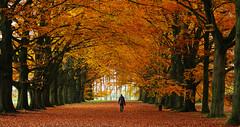 Autumn impression (roland_tempels) Tags: autumn nature