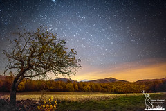 Apple tree under the night sky (simone_aramini) Tags: atro astrophotography longexposure star appennino absolutelystunningscapes autunno nightlight nationalgeografic nature