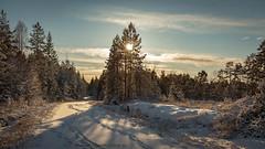 20171119003988 (koppomcolors) Tags: koppomcolors winter vinter forest skog snö snow sweden sverige scandinavia värmland varmland
