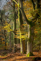 Delicious autumn (Wil Molenkamp) Tags: bomen warnsborn herfst molenkamp arnhem