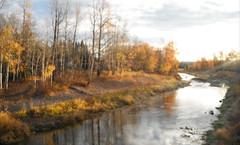 Glowing Gold ....... Sundre Alberta Canada (Mr. Happy Face - Peace :)) Tags: albertabound hss sunday naturelover alberta canada sundre trees river autumn fall