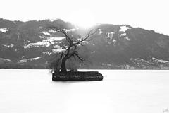 Hoy - The Smallest Island in Lake Constance (johaennesy) Tags: hoy bodensee lakeconstance bayern lindau monochrome blackandwhite schwarzweis sunrise sonnenaufgang pfänder pentaxian longexposure