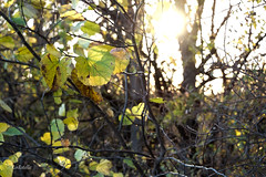 Arbor Hills (RinEstellePhotography) Tags: arborhillsnaturepreserve arborhills nature fall red orange yellow sunset leaves unamusedboyfriend