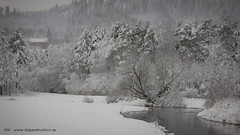 20171129001065 (koppomcolors) Tags: koppomcolors vinter winter snö snow värmland varmland sweden sverige scandinavia