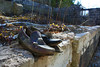 Granpa's Shoes (ETt_) Tags: shoes ruins abandonned objets house building forest trees haunted scary horror