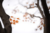 Maple 楓葉 (MelindaChan ^..^) Tags: maple 楓葉 楓 葉 gyeongju skorea 韓國 慶州 plant leaf leaves branch tree art bokeh minolta250mmf56 chanmelmel mel melinda melindachan autumn fall reflexlens