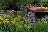 DSC_3246 (facebook.com/DorotaOstrowskaFoto) Tags: ogródbotaniczny kwiaty