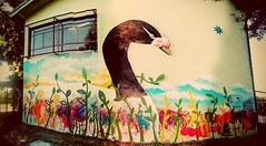 (re)Encuentro con los Cisnes (Felipe Smides) Tags: katemu jardin mural smides mapuche cisnedecuellonegro cisne cuellonegro sur valdivia