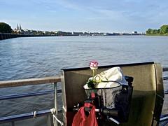 Une rose pour...! (Patevy Damant) Tags: extérieur bateau fleuve bordeaux aquitaine garonne fleur rose ville olympus eau